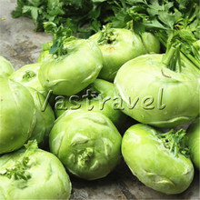 200 Pcs Green Kohlrabi Seeds Easy-growing Productive Crisp Heirloom NON-GMO DIY Home Garden Vegetable for Salad