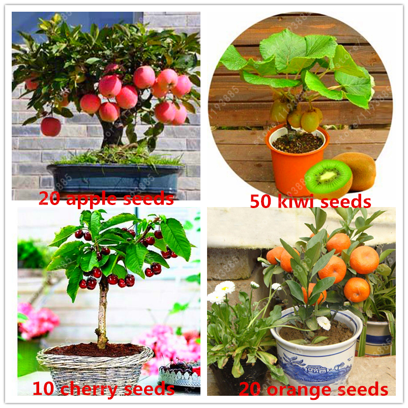 4 kind fruit,bonsai fruit tree seeds,vegetable and fruit seeds garden plant Delicious apple orange kiwi cherry total 100+ seeds ...