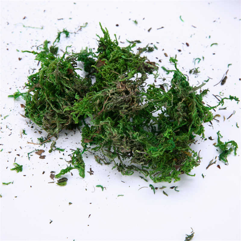 Natural 30g-100g bag dry real green moss decorative plants vase artificial turf silk Flower accessories for flowerpot decoration