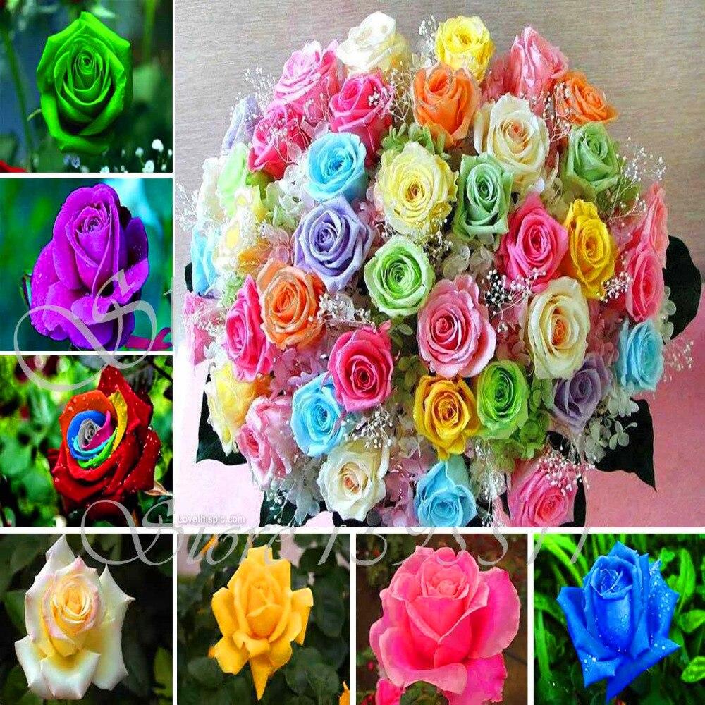 100 pcs rose seeds flower rainbow rose seeds plant bonsai for How to plant rainbow rose seeds