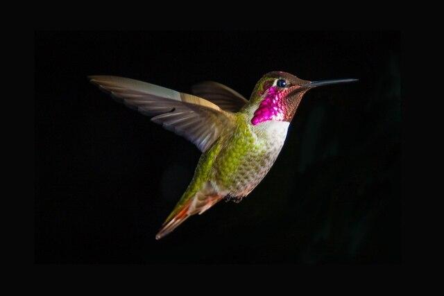 Animal Bird Close Up Colorful Hummingbird KD683 Living Room Home Wall Art  Decor Wood Frame Fabric