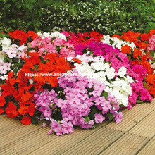 100pcs/lot, garden flower seedsplants Four Seasons colorful impatiens plants bonsais potted henna