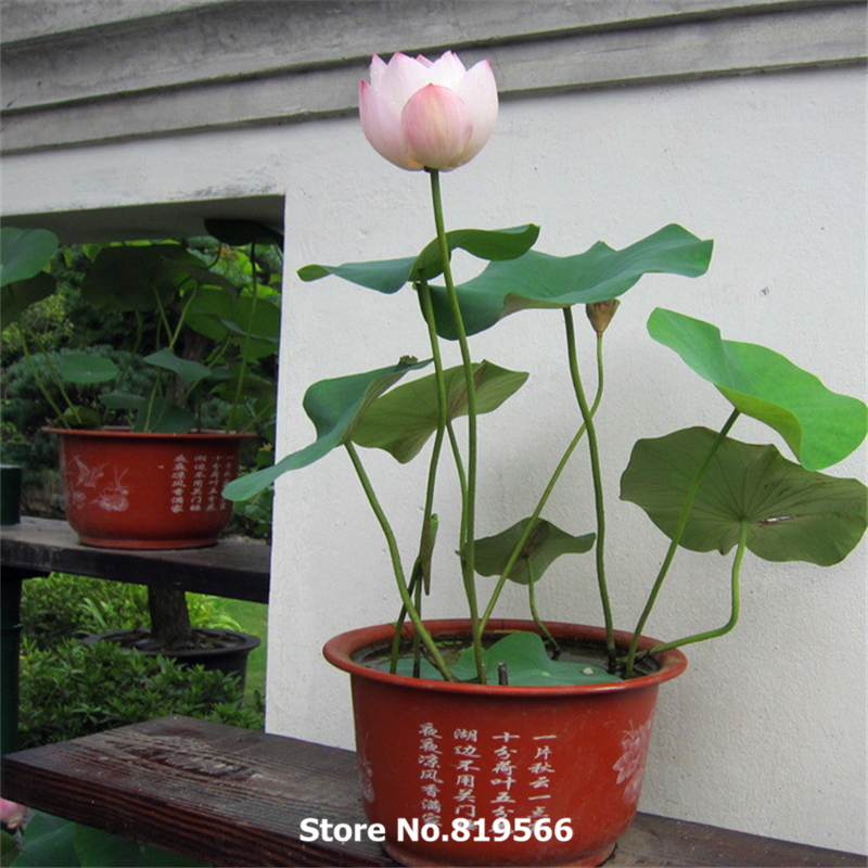 Image Result For How To Start Nursery Garden In Tamilnadu