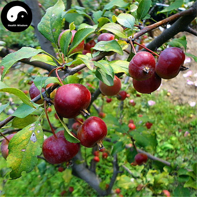 compare prices on chinese apple tree online shopping/buy low, Beautiful flower