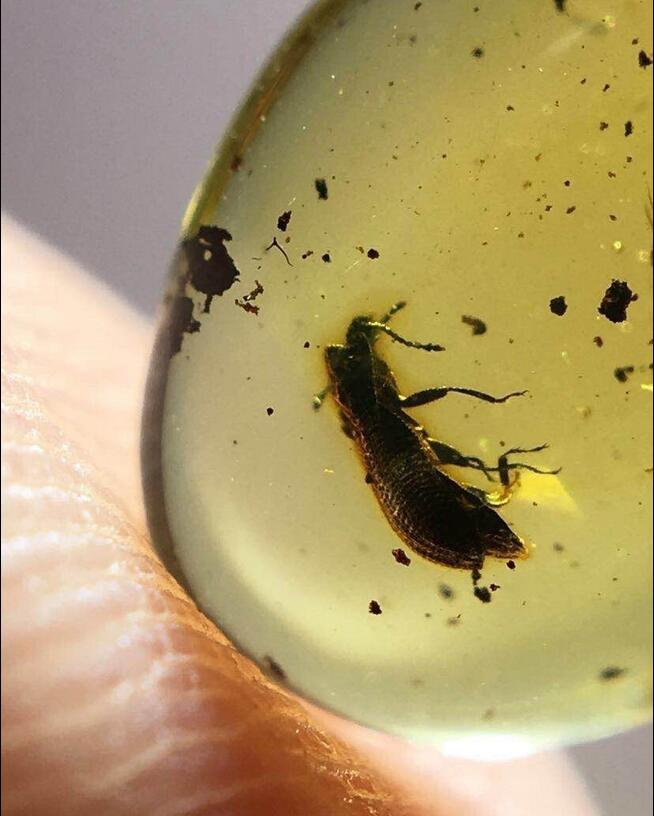 цены Cretaceous rare dung beetle burmite Untreated Myanmar Amber insect 100 million years ago lynx stone women men jewelry accessory