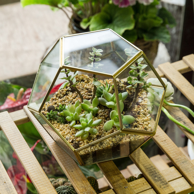 NCYP Garden Desktop Display Planter Polyhedron Glass