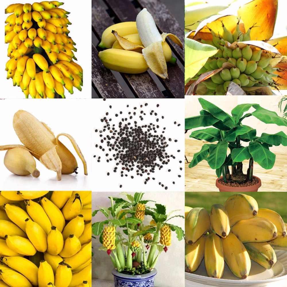 Бонсай 100 шт./пакет Редкие банановые фрукты органические геиримы, горшечные растения для дома Садовые посадки