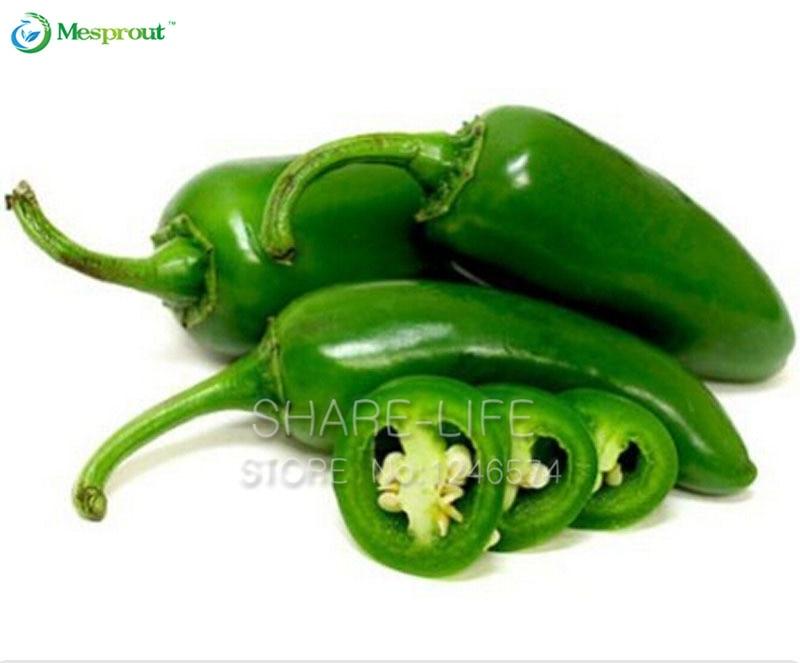 Fresh Hand Picked 2018 Heirloom Aji Cito Pepper Seeds-R 027 25