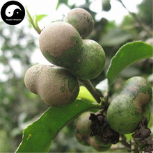 Buy Pu Erh Tea Tree Seeds 30pcs Plant Chinese Puer Tea Tree For Yunnan Pu Er(China)
