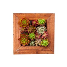 Caioffer Modern Square Flower Pots Shapes Garden Wooden Wall Mounted Flowerpots Decorative Hanging Planters For Succulents