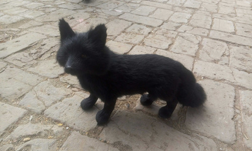 Simulation Fox Large 35x23cm Model Toy Lifelike Black Fox Model Home