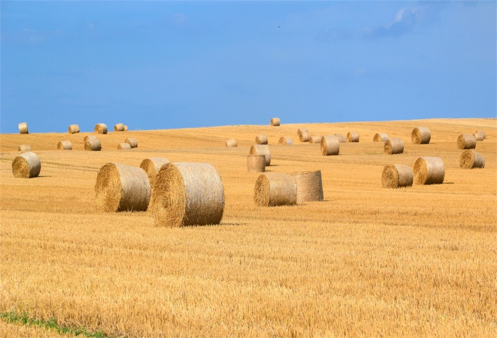 Laeacco Autumn Hay Bales Field Photography Backgrounds Customized Photographic Backdrops For Photo Studio