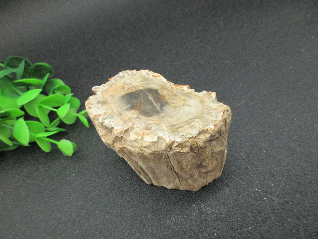 AAA+ Natural  Wood  Root Fossil Crystal Stone Rock Gemstone Specimen Mineral Gem For Christmas gift