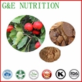 Hot selling Natural Hawthorn Leaf Extract 4:1 100g