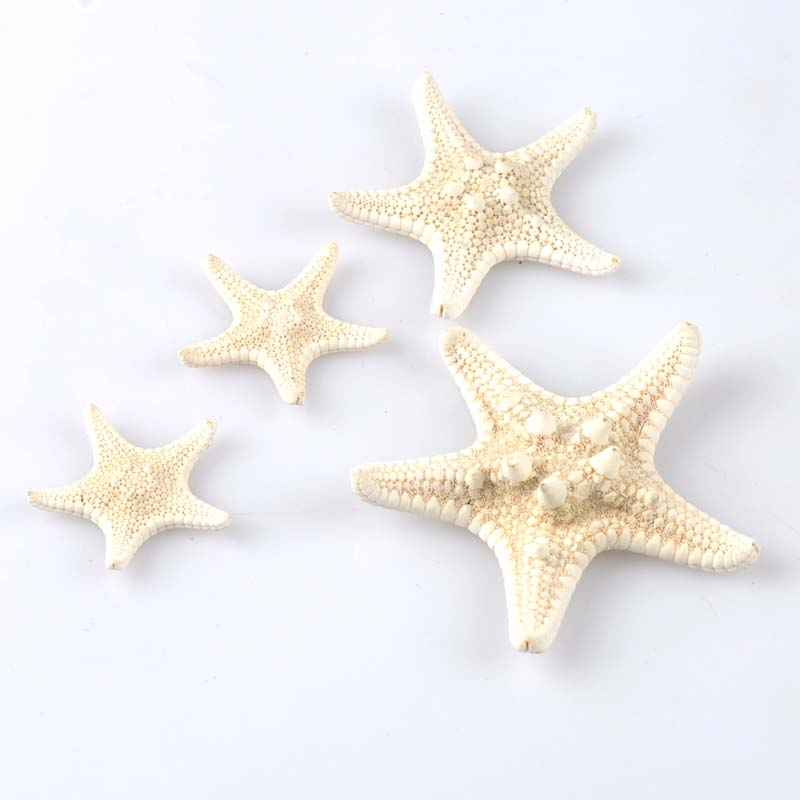 Natural Starfish BEIGE Color Scrapbooking Carft For Party Home Decoration Random Mixed 4pcs 2-6CM CP1802