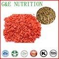 Top qualidade venda quente seco goji berry extract/pó da baga do goji para goji berry cápsula 500 mg x 100 pcs