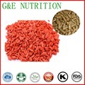 Top quality hot sale dried goji berry extract/goji berry powder for goji berry capsule   500mg x 100pcs