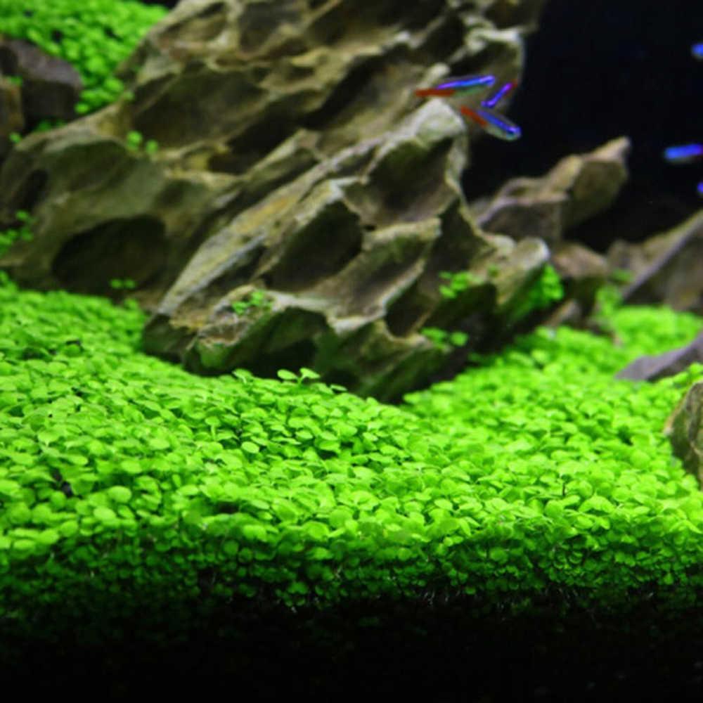 حوض السمك بذور النبات Glossostigma هيميانثوس calitrichoide سهلة النمو النباتات المائية العشب خزان الأسماك المناظر الطبيعية زخرفة ديكور