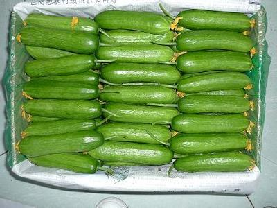 Dutch mini cucumber seeds -20seeds- thornless type taste good import quality!