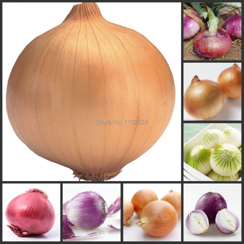 200pcs Colorful Fresh Onion Seeds Vegetables seeds