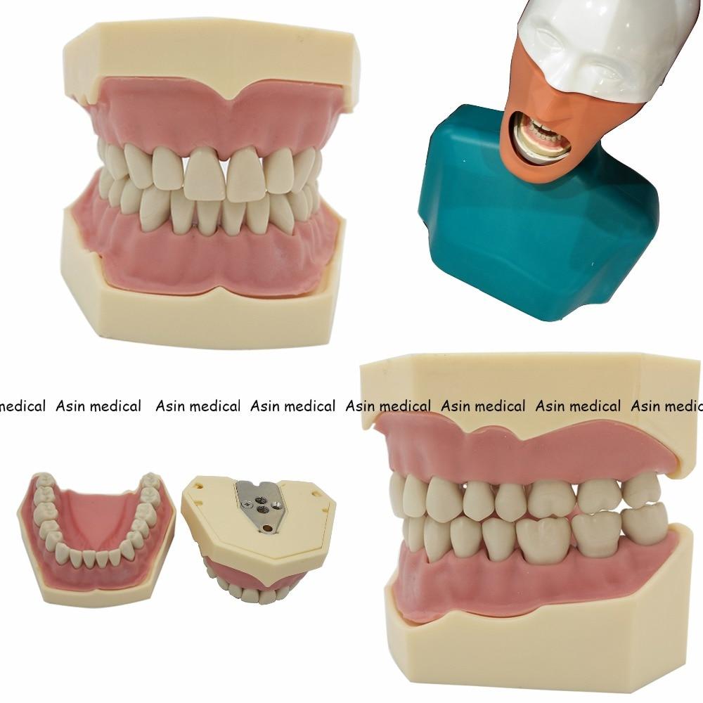 2018 nowy Dental miękkie gumowe model zębów wymienny 28 pc/32 pc zębów NISSIN 200 KAVO model głowy kompatybilny dentysta nauczanie nauka w Wybielanie zębów od Uroda i zdrowie na  Grupa 1