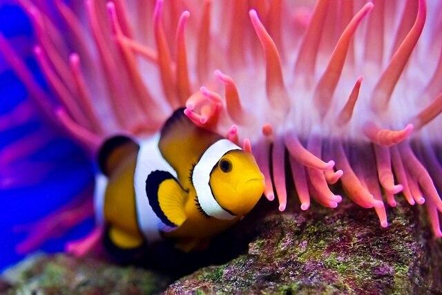 Clown Fish undersea sea tropical animal KC179 living room home wall ...