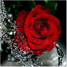 New arrival 5d DIY diamond embroidery red rose & waterdrop picture  painting flower round mosaic cross stitch