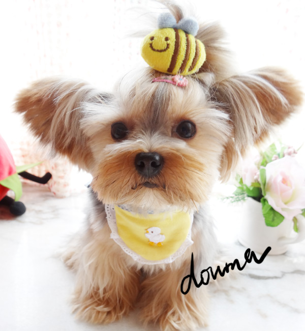 Pet Grooming Super Cute Little Bee Pet Dog Tactic Yorkshire Flower Headdress Jewelry Hairpin Accessories
