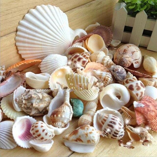 Conchas De Mar Natural Mezclado Decoracion Estilo Mediterraneo - Fotos-de-conchas-de-mar