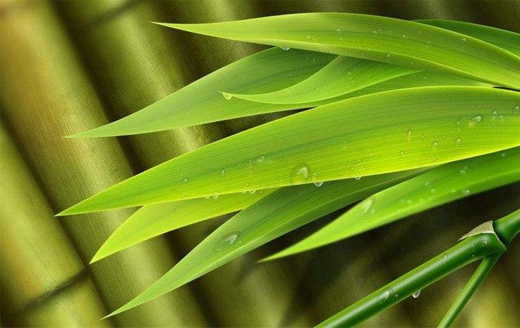 Bamboo Fiber Cotton Silicone Non-Slip Socks Or Slippers
