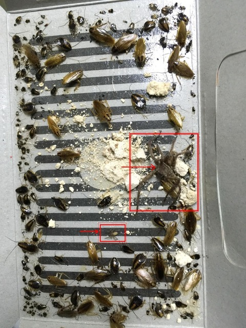 Hot Mr bug insecto plaga matando cebo trampa casa, para cucarachas ...
