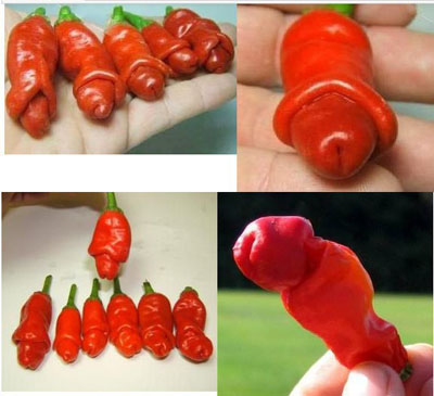 Rare Magical Vegetable 120 pcs bag Sexy Beauty Pepper Plants beautiful Bosom Pepper chili for home garden in Bonsai from Home Garden