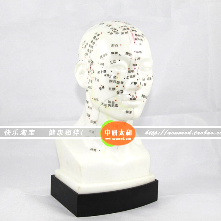 Chinese Head acupuncture model Head Acupuncture Point Model he Human Head Acupuncture Point Model Head Meridian Model chinese acupuncture model  acupuncture