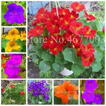 10 pcs/ bag Blooming Nasturtium Bonsai Rare Ornamental Potted Garden Plant Outdoor Tropaeolum Majus Flower Easy Grow Planting(China)