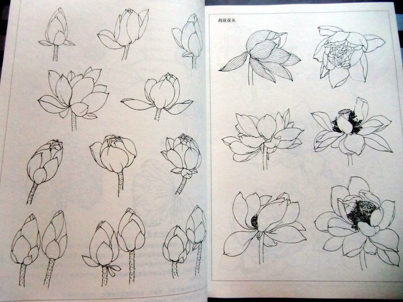 Tattoo Book Lotus Flower Line Drawing Chinese Painting Tattoo Flash