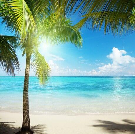 Seascape Vinyl Cloth Seaside Blue Sky Palm Tree