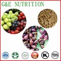 Manufactutrer sell high quality grape seed extracts capsules 500mg x100pcs