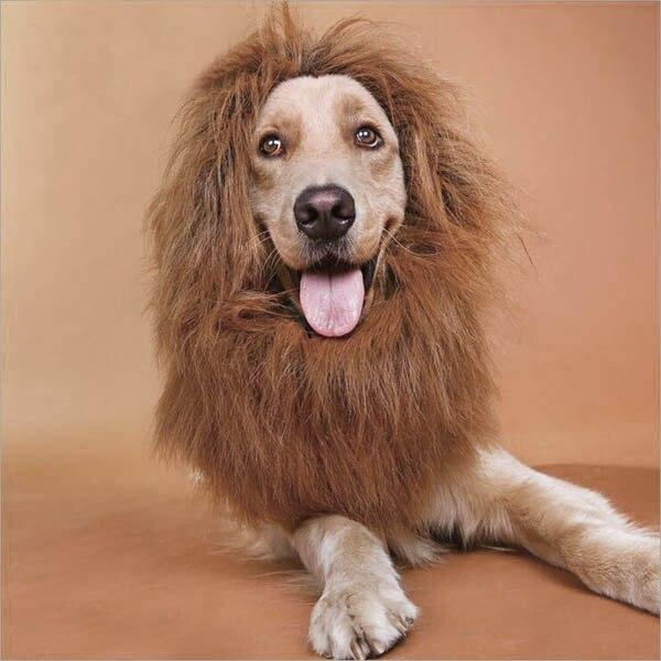 Lion Mane Wig Pet Cosplay Winter Cat Dog Costume Pet Halloween Puppy Headgear Supplies New Dress Up Dog&Amp;Cat Sleeve