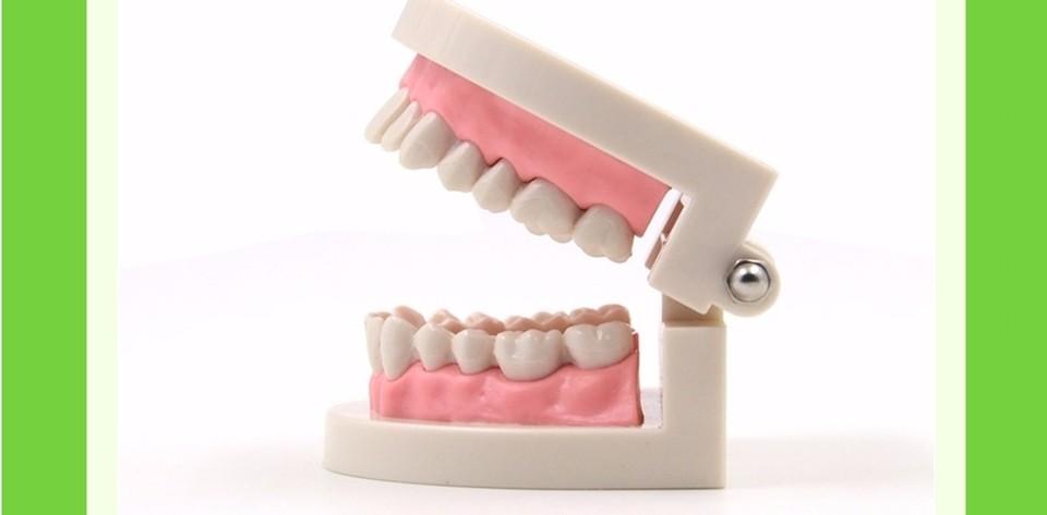 Teeth Model0000004