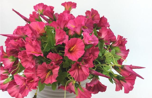 24pcs 7 fork floret simulation morning glory potted faux flower silk 24pcs 7 fork floret simulation morning glory potted faux flower silk flower artifical flowers hotel balconya mightylinksfo