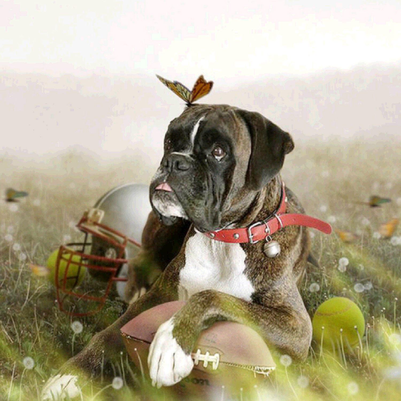 Diy Diamond Painting Animal Dog Cross Stitch Diamond Embroidery Needlework Home Decor Gift