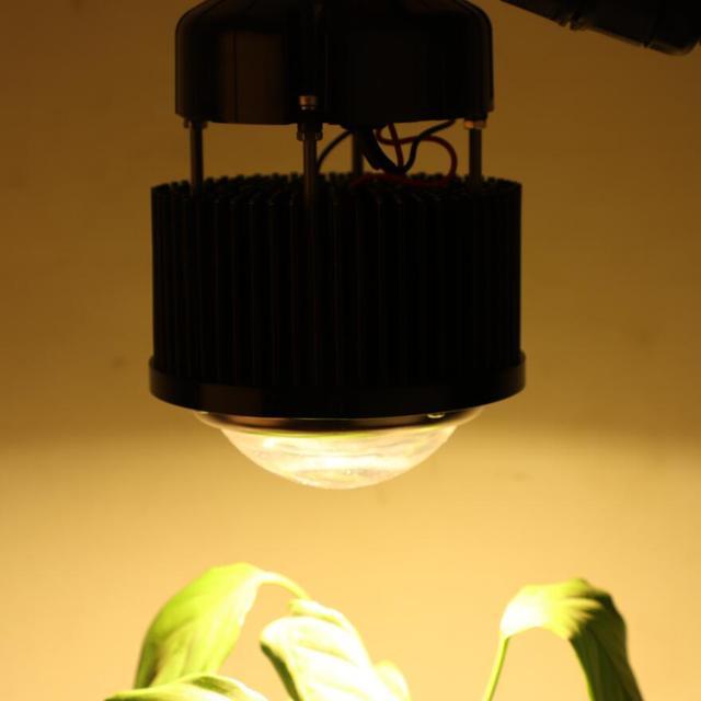 קריס CXB3590 COB LED לגדול מנורת מלא ספקטרום לבן אור 3000K/3500K/5000K/6500K עם Meanwell נהג HBG 60 1400
