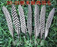 Miễn phí vận chuyển! 50 Pcs DIY dress/phụ kiện nhà 20-25 cm/8-10in Natural RARE trắng bạc Pheasant lông gà