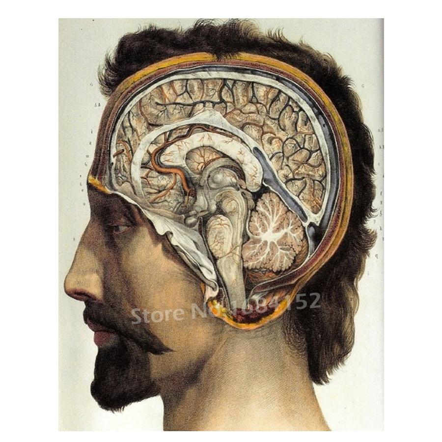 5D DIY Diamond Embroidery Medical Surgical Brain Anatomy art Rhinestones Full Diamond Painting Cross Stitch Mosaic decor A406