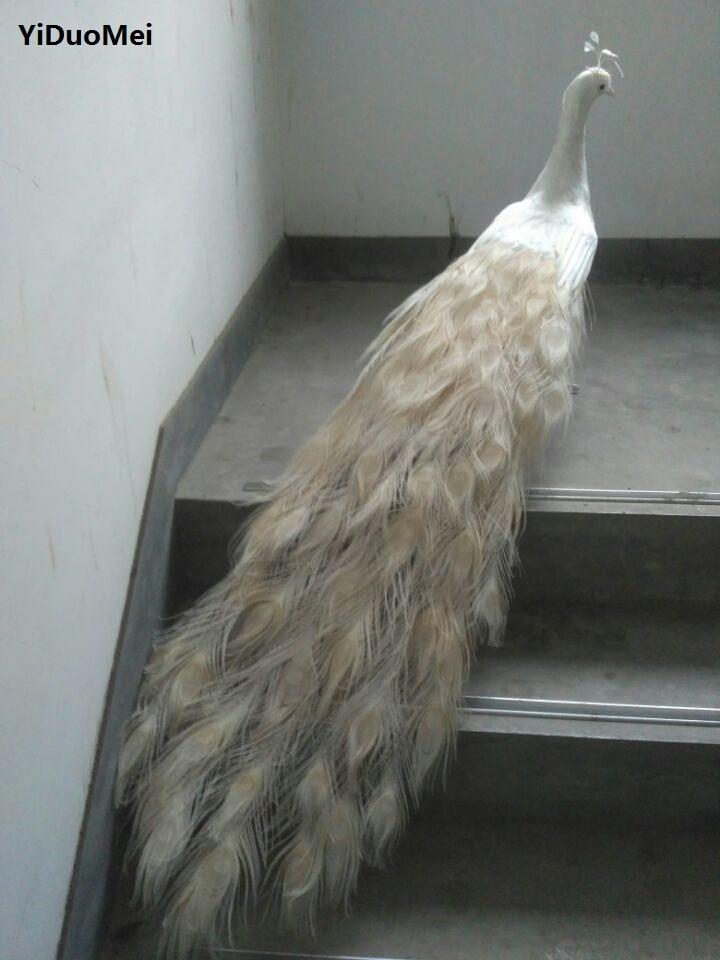 Большой 120 см белые перья павлина модель пены и перья красивая птица ремесло, опору, главная Сад подарка украшения a2672