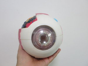 Image 3 - Eyeball model Diameter 15CM Special decoration Clinic personalized decorative Figurines biology ophthalmology doctor