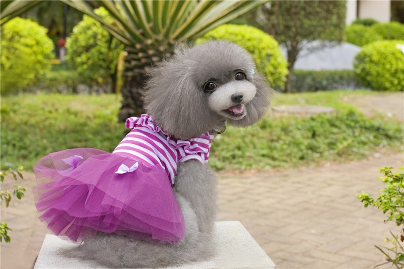 Y04 Sweety Small Dog Dress Cute Pet Dog Puppy Stripe Bow Lace Tutu Dress Princess Pet Skirt for Chihuahua Yorkshire