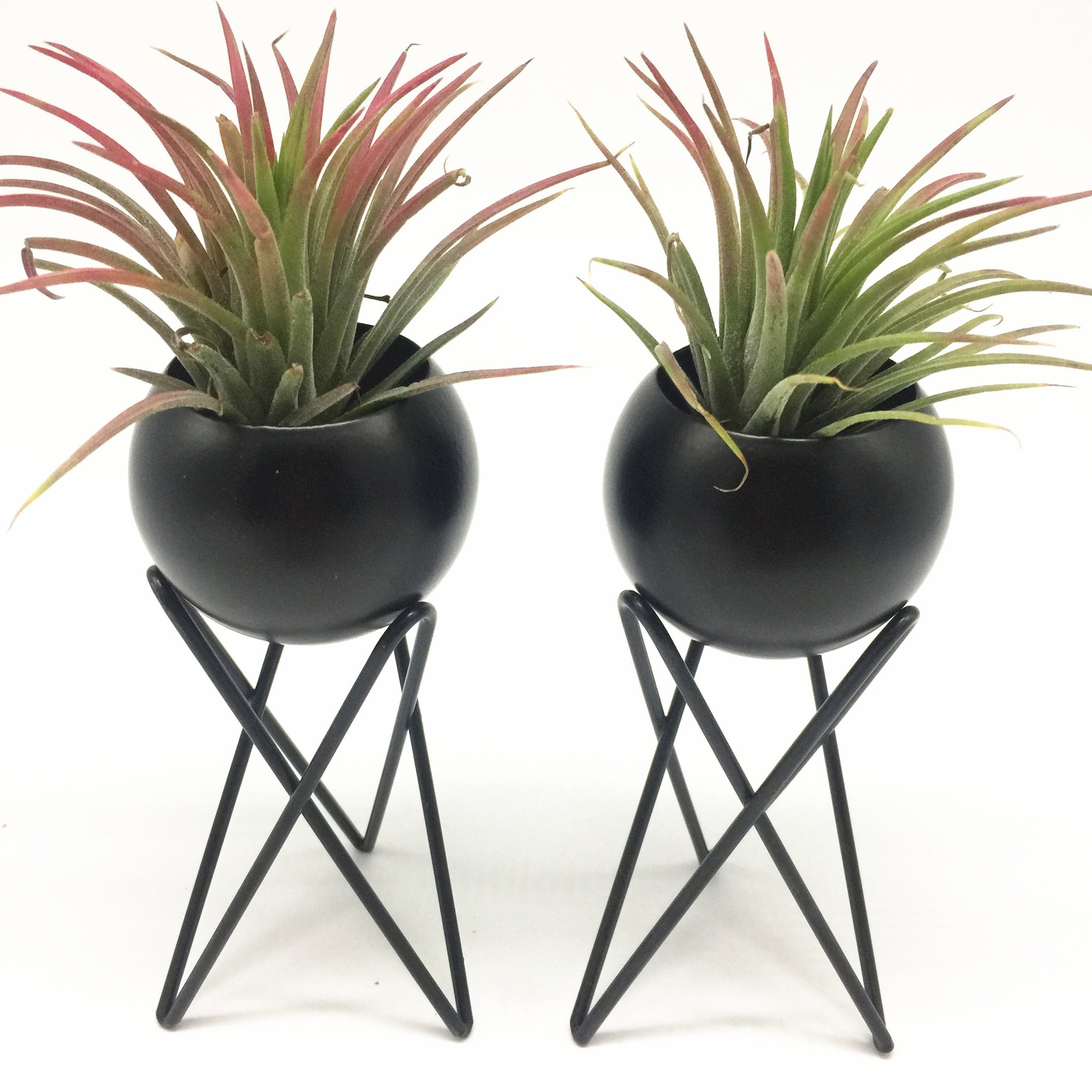 Set of 2 tabletop standing air plant holder air plant stand air plant container tillandsia holder