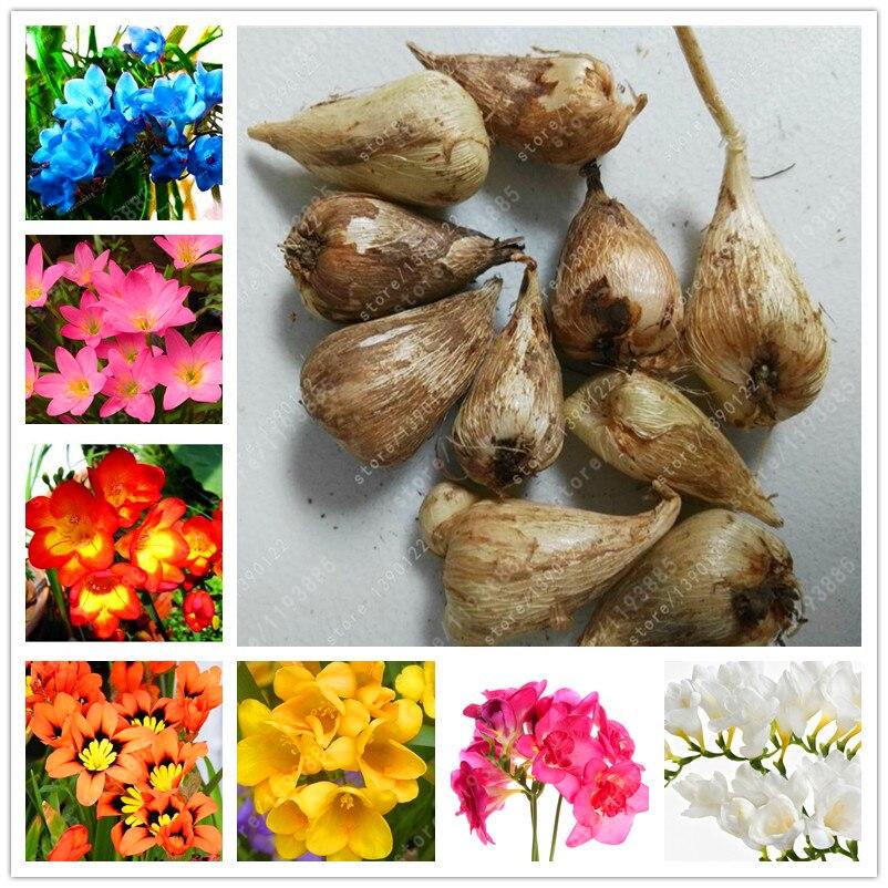 подразделяются типу луковицы растений садовых фото и название стандартными