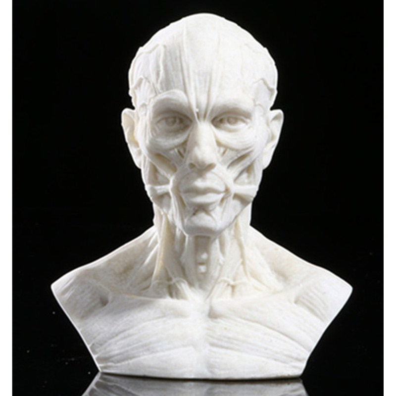 European Style Simulation Human Body Half-Length Photo Or Portrait Skullcandy Sculpture Line Drawing Teaching Aids L999